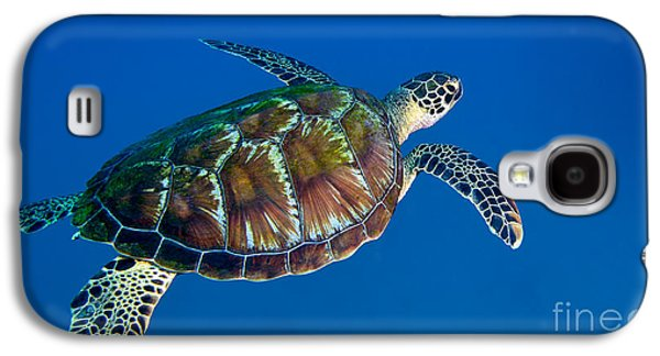 Undersea Photography Galaxy S4 Cases - A Black Sea Turtle Off The Coast Galaxy S4 Case by Michael Wood
