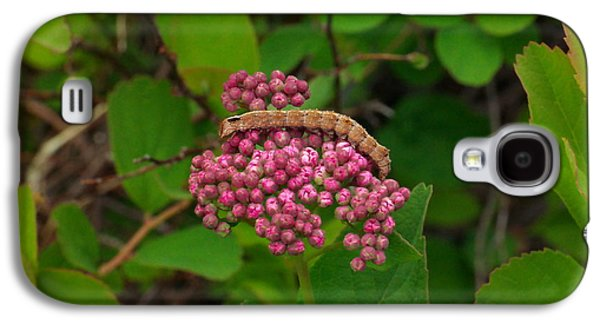 Creepy Galaxy S4 Cases - A caterpillar on flowers Galaxy S4 Case by Jeff  Swan
