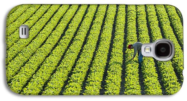 Man Looking Down Galaxy S4 Cases - A Farmer Walking Through A Large Green Galaxy S4 Case by Scott Sinklier