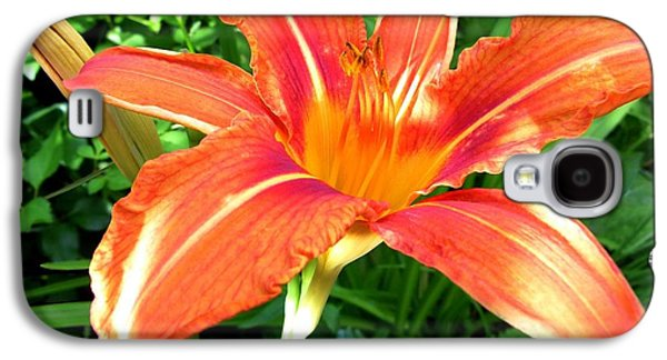 Botanical Galaxy S4 Cases - A Grrreat Tiger Lily Galaxy S4 Case by Will Borden