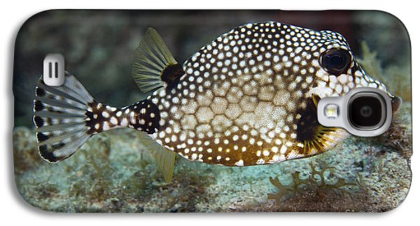 Undersea Photography Galaxy S4 Cases - A Spotted Trunkfish, Key Largo, Florida Galaxy S4 Case by Terry Moore