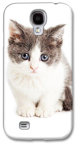Adorable Photographs Galaxy S4 Cases - Adorable Kitten Sitting Looking Forward Galaxy S4 Case by Susan  Schmitz