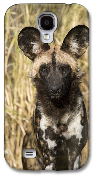 Animals and Earth - Galaxy S4 Cases - African Wild Dog Okavango Delta Botswana Galaxy S4 Case by Suzi Eszterhas