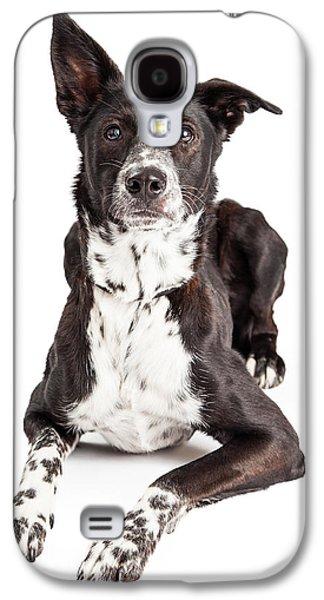 Studio Photographs Galaxy S4 Cases - Alert Australian Shepherd Mixed Breed Dog Looking Up Galaxy S4 Case by Susan  Schmitz