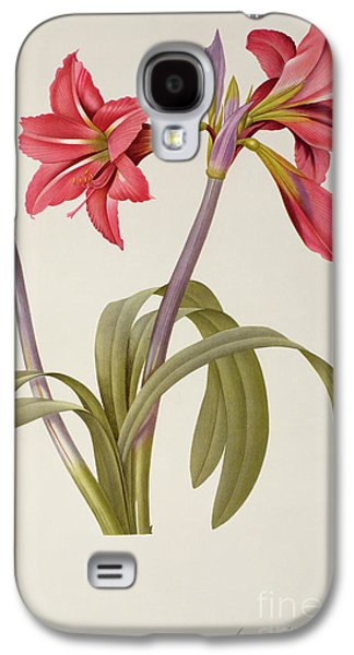 19th Galaxy S4 Cases - Amaryllis Brasiliensis Galaxy S4 Case by Pierre Redoute