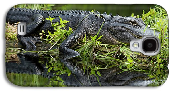 American Alligator In The Wild Galaxy S4 Case by Dustin K Ryan