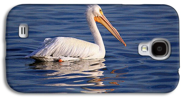 Landmarks Photographs Galaxy S4 Cases - American White Pelican by H H Photography of Florida Galaxy S4 Case by HH Photography of Florida