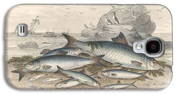 Botanical Galaxy S4 Cases - Anchovies and Herring Galaxy S4 Case by Oliver Goldsmith
