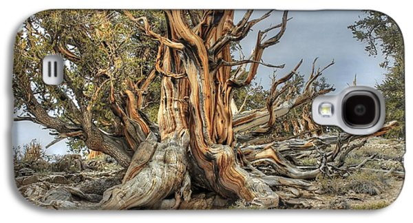 Ancient Galaxy S4 Cases - Ancient Bristlecone Pine Galaxy S4 Case by Jane Linders