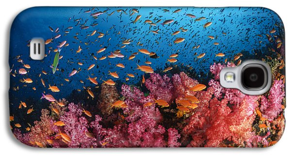 Schools Of Fish Galaxy S4 Cases - Anthias Fish And Soft Corals, Fiji Galaxy S4 Case by Todd Winner
