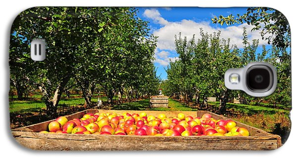 Apple Picking Season Galaxy S4 Case by Catherine Reusch  Daley