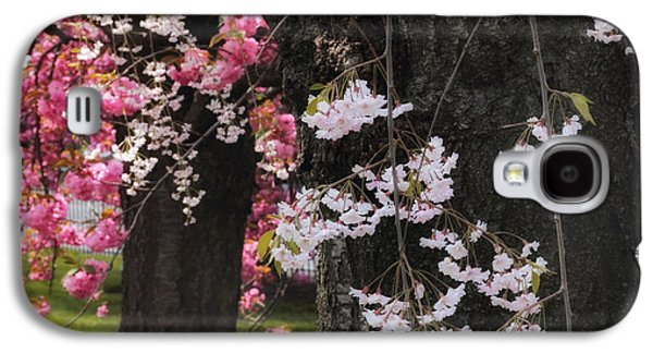 Cherry Blossoms Galaxy S4 Cases - Asian Cherry Galaxy S4 Case by Jessica Jenney