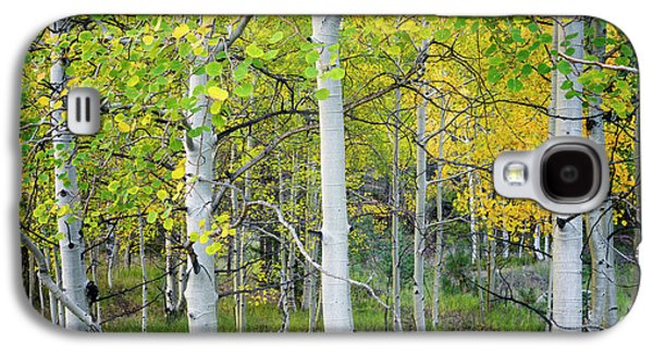Aspens In Autumn 6 - Santa Fe National Forest New Mexico Galaxy S4 Case by Brian Harig