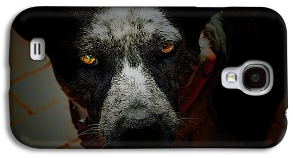 Cattle Dog Galaxy S4 Cases - Australian Cattle Dog Galaxy S4 Case by Steven  Digman