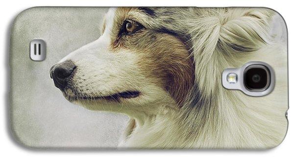 Working Breed Galaxy S4 Cases - Australian Shepherd Portrait 1 Galaxy S4 Case by Wolf Shadow  Photography