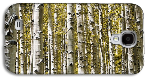 Nature Study Photographs Galaxy S4 Cases - Autumn Aspens Galaxy S4 Case by Adam Romanowicz