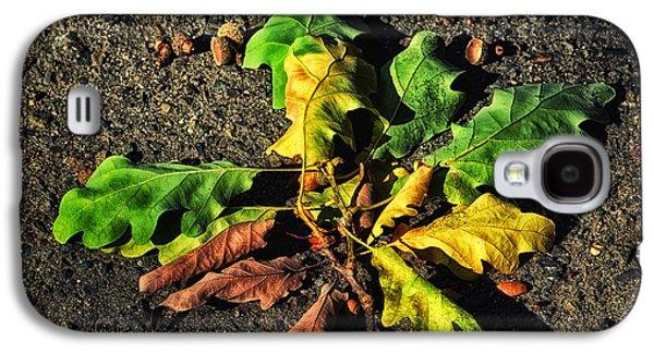 Landscapes Photographs Galaxy S4 Cases - Autumn LF Galaxy S4 Case by SK Pfphotography