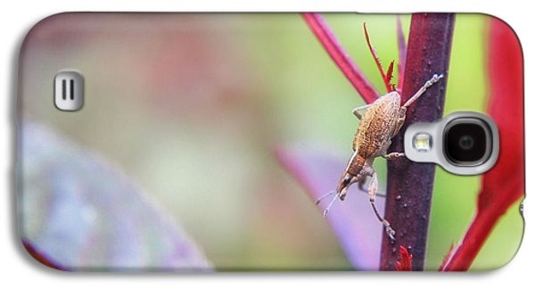 Landscapes Photographs Galaxy S4 Cases - Autumn macro Galaxy S4 Case by SK Pfphotography