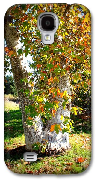 Fall Trees Fall Color Galaxy S4 Cases - Autumn Sycamore Tree Galaxy S4 Case by Carol Groenen