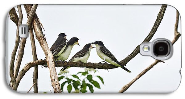 Three Chicks Galaxy S4 Cases - Baby Birds - Eastern Kingbird Family Galaxy S4 Case by Christina Rollo