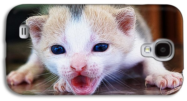 Digital Galaxy S4 Cases - Baby Cat mewing Galaxy S4 Case by Queso Espinosa