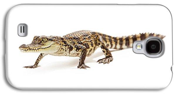 Studio Photographs Galaxy S4 Cases - Baby crocodile walking forward Galaxy S4 Case by Susan  Schmitz