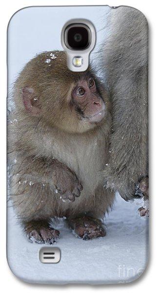 Baby Snow Monkey Galaxy S4 Case by Jean-Louis Klein & Marie-Luce Hubert