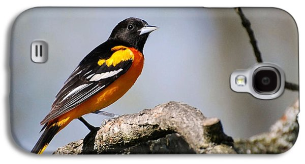 Baltimore Oriole Galaxy S4 Case by Christina Rollo