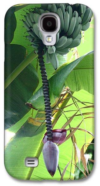 Slavery Galaxy S4 Cases - Banana Palm Tree Fruit Galaxy S4 Case by Rumyana Whitcher