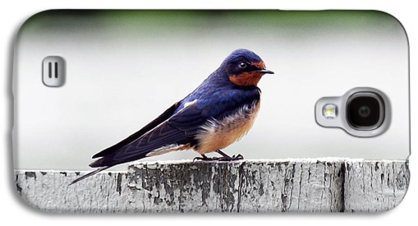 Hirundo Rustica Galaxy S4 Cases - Barn Swallow at Fort Larned Galaxy S4 Case by Catherine Sherman