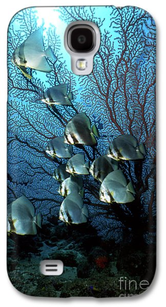 Undersea Photography Galaxy S4 Cases - Batfish And Sea Fan, Papua New Guinea Galaxy S4 Case by Beverly Factor