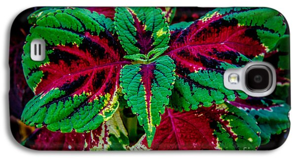 Botanical Galaxy S4 Cases - Beautiful Coleus Galaxy S4 Case by Robert Bales