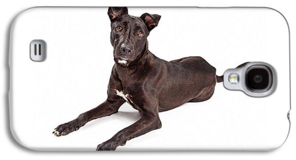 Beautiful Large Labrador Retriever Crossbreed Dog Galaxy S4 Case by Susan Schmitz