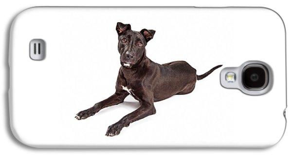 Mixed Labrador Retriever Galaxy S4 Cases - Beautiful Large Labrador Retriever Crossbreed Dog Galaxy S4 Case by Susan  Schmitz