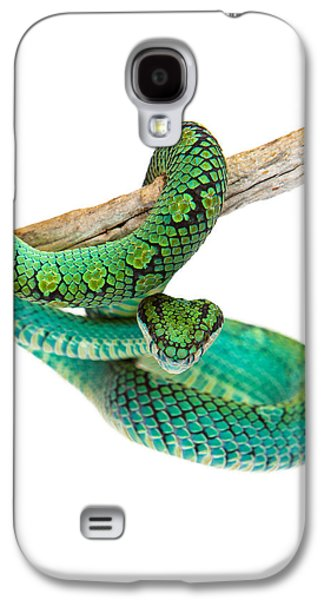 Studio Photographs Galaxy S4 Cases - Beautiful Sri Lankan Palm Viper Galaxy S4 Case by Susan  Schmitz