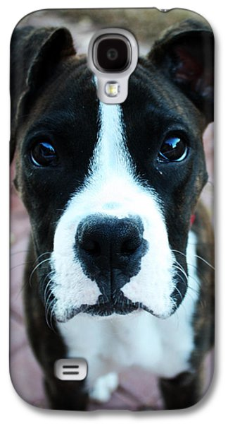 Boxer Galaxy S4 Cases - Begging  Galaxy S4 Case by Gabe Knowls