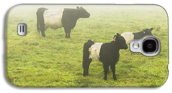 Maine Meadow Galaxy S4 Cases - Belted Galloway Cows Grazing  In foggy Farm Field Maine Galaxy S4 Case by Keith Webber Jr