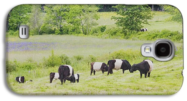 Maine Meadow Galaxy S4 Cases - Belted Galloway Cows Rockport Maine Poster Prints Galaxy S4 Case by Keith Webber Jr