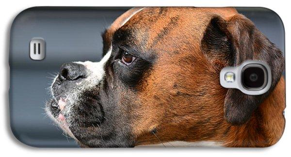 Boxer Galaxy S4 Cases - Bently the Boxer Galaxy S4 Case by Jo-Ann  Matthews