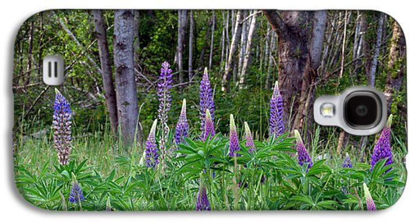 Beach Landscape Galaxy S4 Cases - Bigleaf Lupines Galaxy S4 Case by Michael Russell