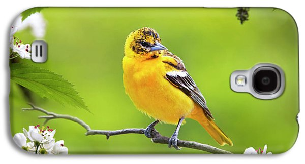 Bird And Blooms - Baltimore Oriole Galaxy S4 Case by Christina Rollo