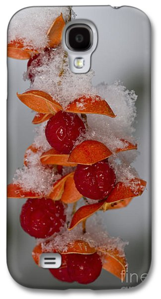 Bittersweet Galaxy S4 Cases - Bittersweet Berries Galaxy S4 Case by Kenneth M. Highfill