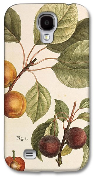 Black Apricot And Apricot Plants Galaxy S4 Case by Pierre Joseph Redoute