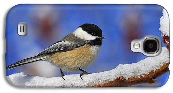 Black-capped Chickadee In Sumac Galaxy S4 Case by Tony Beck