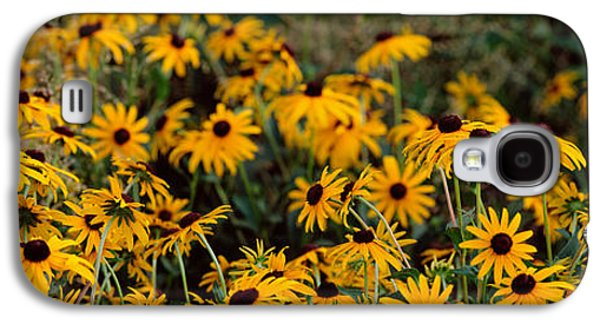 Florida Flowers Galaxy S4 Cases - Black-eyed Susan Rudbeckia Hirta Galaxy S4 Case by Panoramic Images