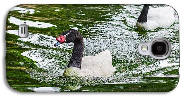 Swan Pair Galaxy S4 Cases - Black Neck Swan Swim Galaxy S4 Case by Jamie Pham