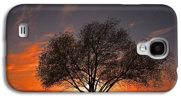 Contemplative Photographs Galaxy S4 Cases - Black Willow Galaxy S4 Case by John Welling