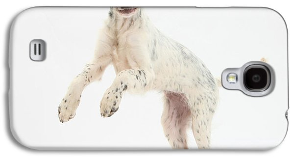 House Pet Galaxy S4 Cases - Blue Belton English Setter Galaxy S4 Case by Mark Taylor