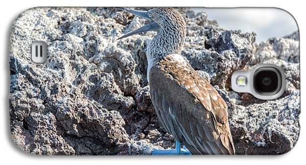 Blue Footed Booby Galaxy S4 Case by Jess Kraft