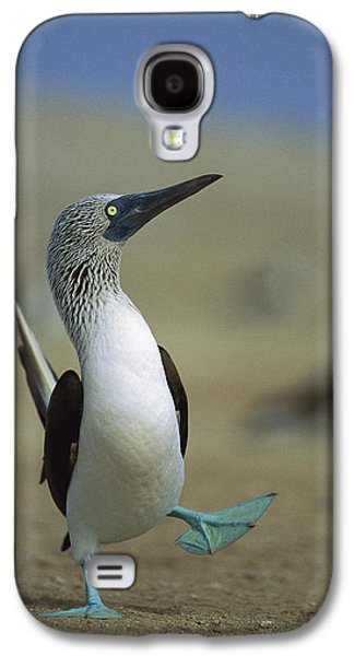 Animals and Earth - Galaxy S4 Cases - Blue-footed Booby Sula Nebouxii Galaxy S4 Case by Tui De Roy